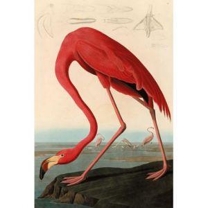 Mondiart American Red Flamingo